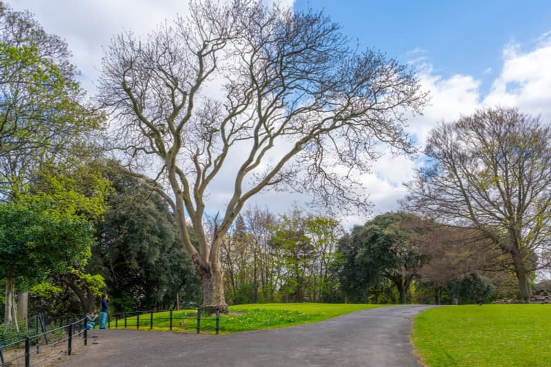 A-WALK-IN-THE-PARK-THE-PEOPLES-FLOWER-GARDENS-IN-PHOENIX-PARK-160262-1