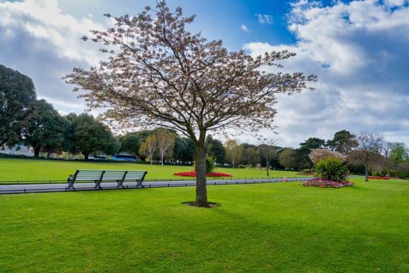 A-WALK-IN-THE-PARK-THE-PEOPLES-FLOWER-GARDENS-IN-PHOENIX-PARK-160264-1