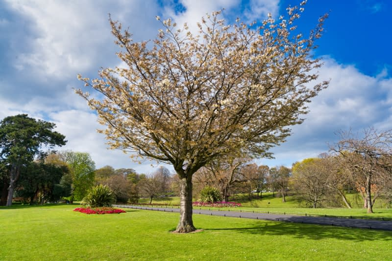 A-WALK-IN-THE-PARK-THE-PEOPLES-FLOWER-GARDENS-IN-PHOENIX-PARK-160268-1