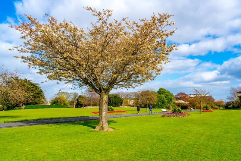 A-WALK-IN-THE-PARK-THE-PEOPLES-FLOWER-GARDENS-IN-PHOENIX-PARK-160269-1