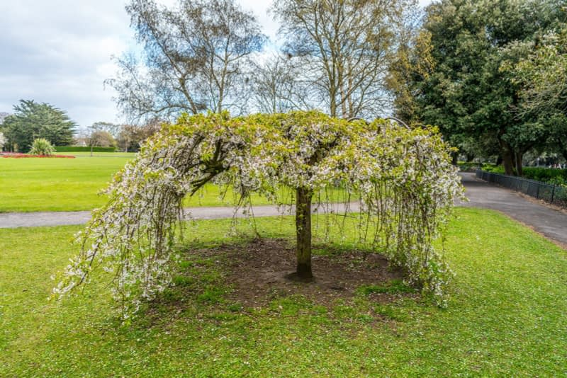 A-WALK-IN-THE-PARK-THE-PEOPLES-FLOWER-GARDENS-IN-PHOENIX-PARK-160275-1