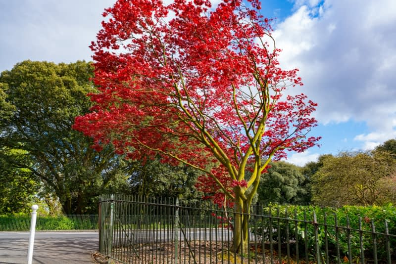 A-WALK-IN-THE-PARK-THE-PEOPLES-FLOWER-GARDENS-IN-PHOENIX-PARK-160286-1