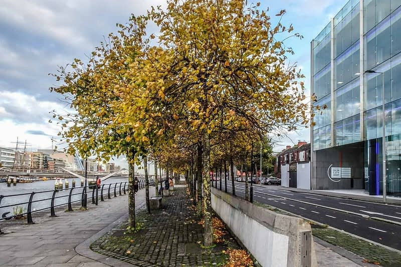 AUTUMN-LEAVES-ALONG-CITY-QUAY-IN-DUBLIN-DOCKLANDS-166537-1