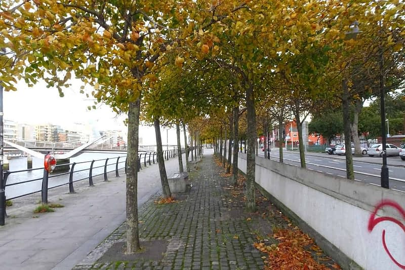AUTUMN-LEAVES-ALONG-CITY-QUAY-IN-DUBLIN-DOCKLANDS-166539-1