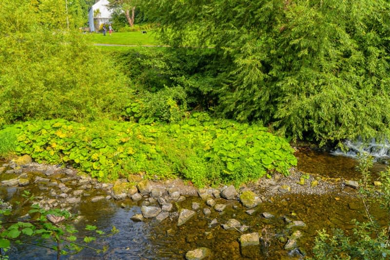 FOLLOWING-THE-DODDER-RIVER-FROM-MILLTOWN-TO-CLONSKEAGH-165434-1