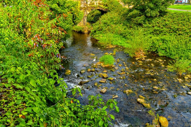 FOLLOWING-THE-DODDER-RIVER-FROM-MILLTOWN-TO-CLONSKEAGH-165443-1