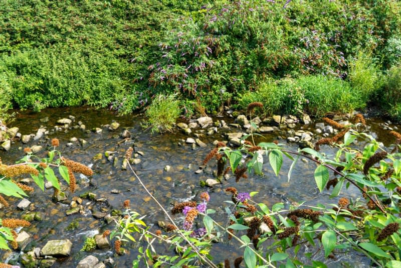 FOLLOWING-THE-DODDER-RIVER-FROM-MILLTOWN-TO-CLONSKEAGH-165446-1