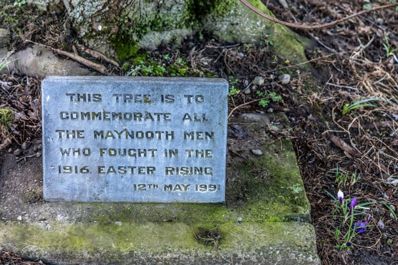 1916-MEMORIAL-TREE-SMALL-PARK-ON-POUND-LANE-IN-MAYNOOTH-160464-1